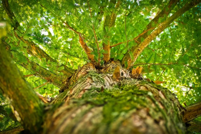 tree1750784_1920.jpg