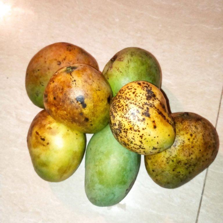 mango 4.jpg