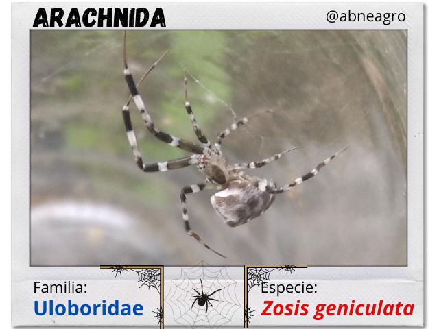 Arachnida.png