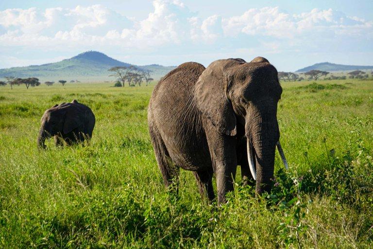 The mighty Serengeti will never die!! Safari in Tanzania.