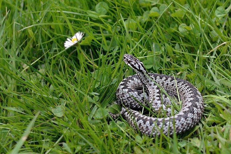 snake-2279246_1280.jpg