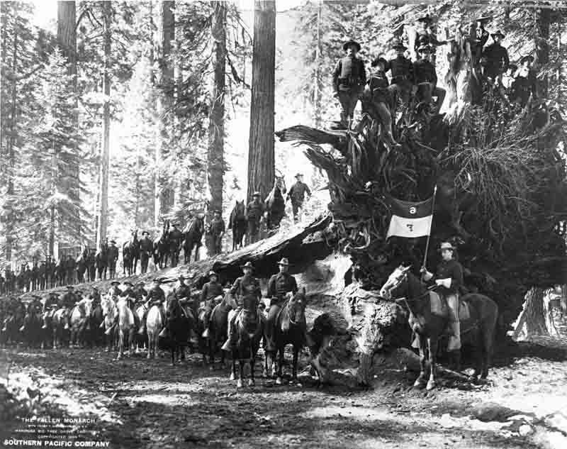 cavalry2.jpg
