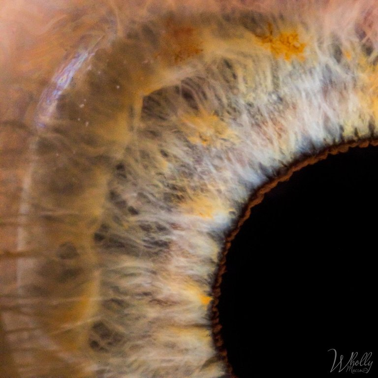 eye-454.jpg