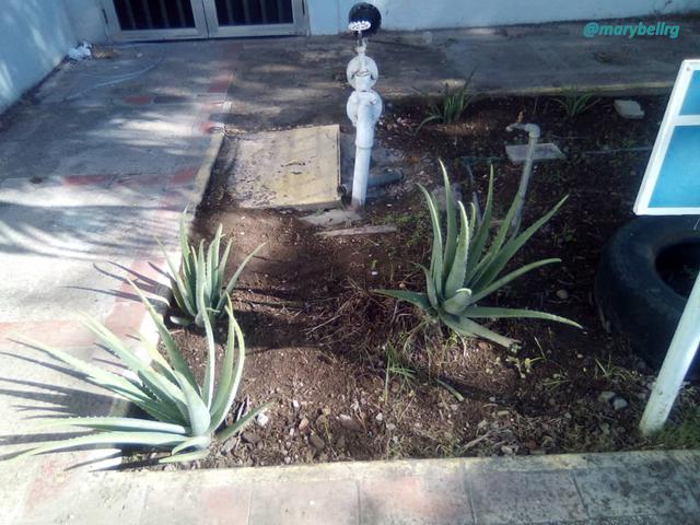 jardin1conmarca.png