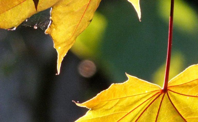 1084-LeafSpider.jpg