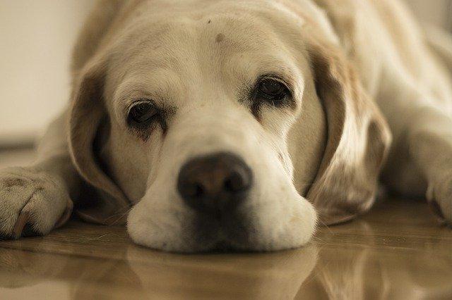 dog-4607655_640.jpg