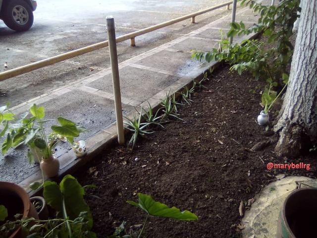 jardinconmarca2.png
