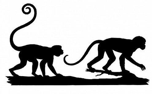 Monkey BS 1.jpg