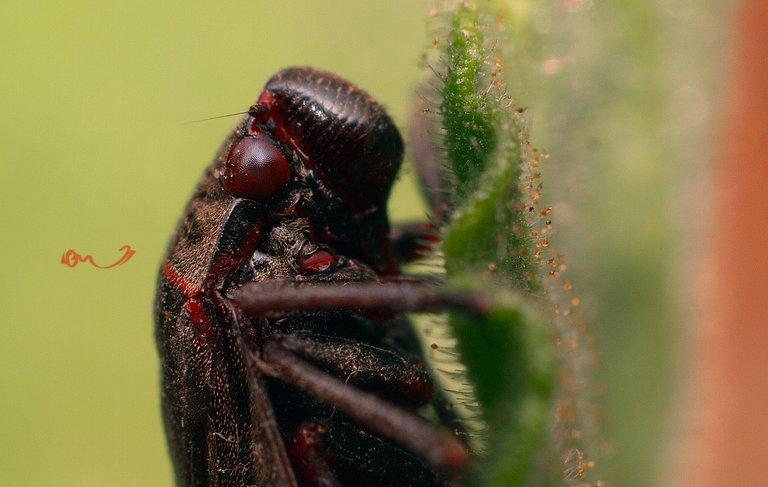 macro insecto.jpg