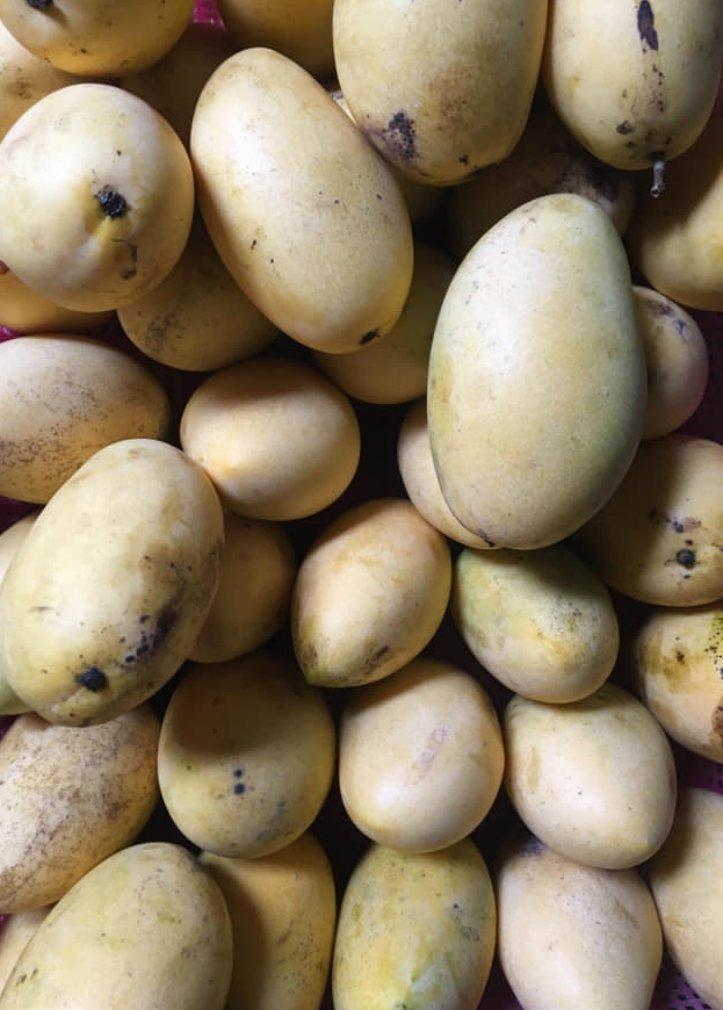 fruits mangoes by ric lariosa1.jpg