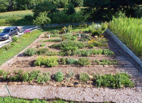 New Herb  crop July 2020.jpg