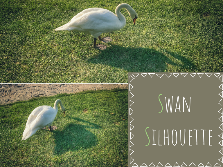 swan_and_silhouette.png