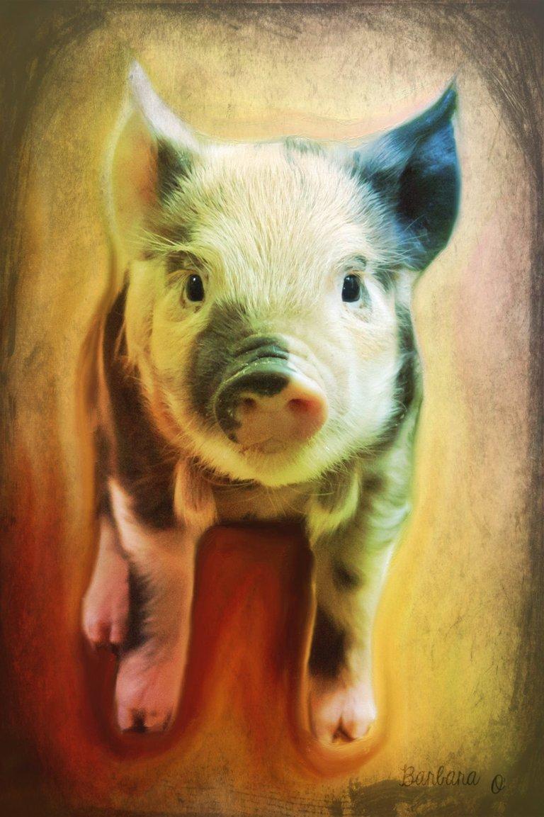 pig_is_beautifuljpg.jpg