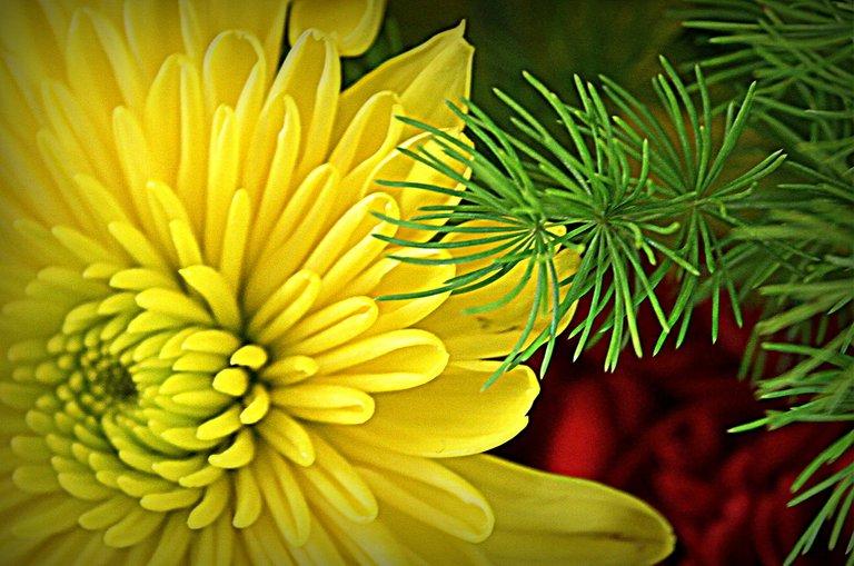 yellow and green.jpg