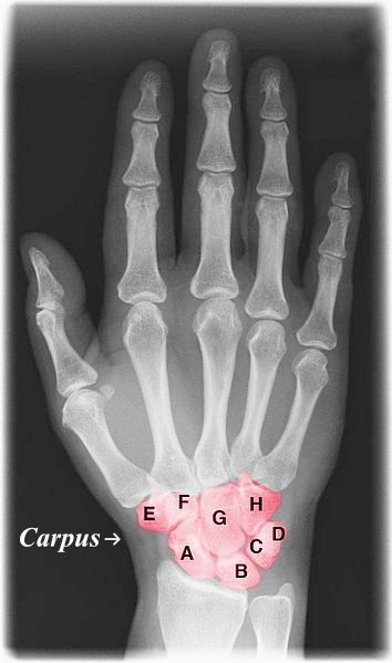 Xray_hand_with_color.jpg