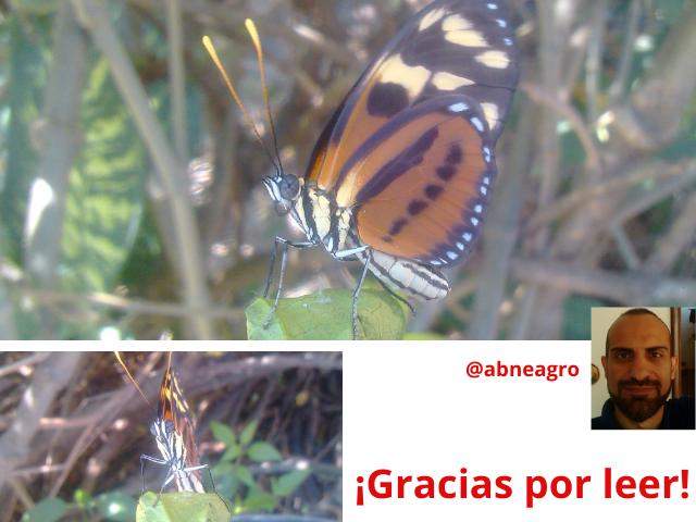 Lepidoptera cierre.png