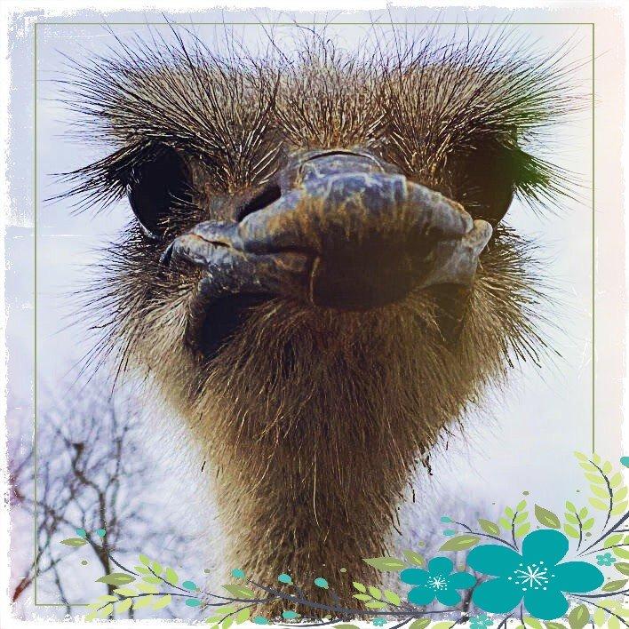 ostrichcloseup (3).jpg