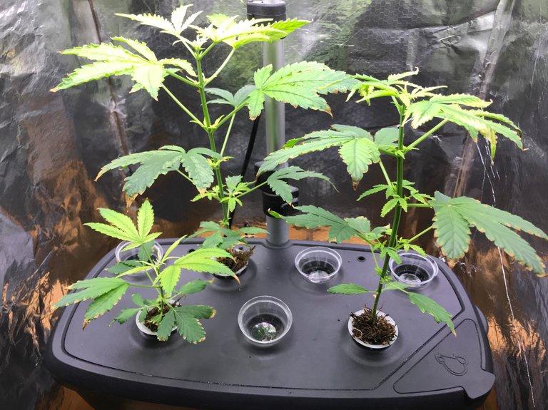 Weed-Plants.JPG