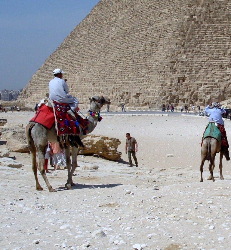 Camel-Giza-2.JPG