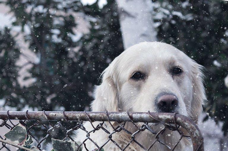 dog-1983156_960_720.jpg