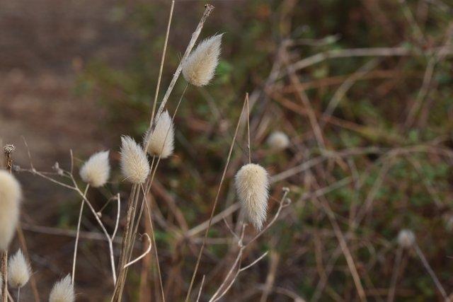 fluffy grass heads 2.jpg