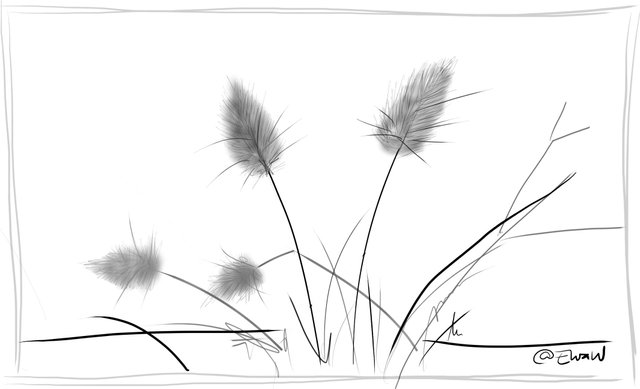 dry grasses bunnytails.jpg