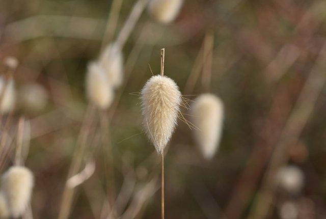 fluffy grass heads 3.jpg