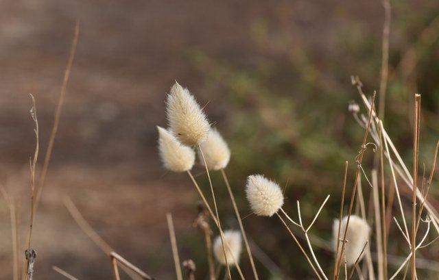 fluffy grass heads 4.jpg