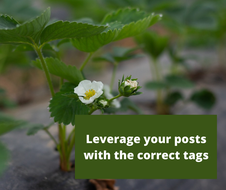 Leverage your posts with the correct tags.png