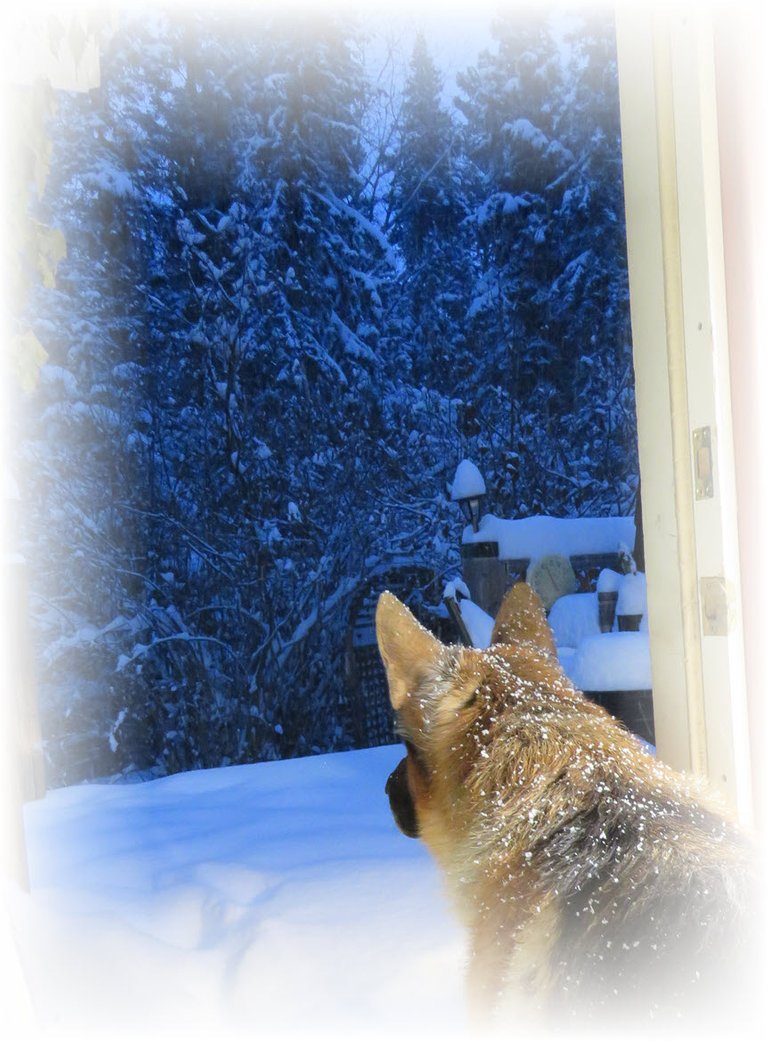 Bruno looking out of door to snowy scene.JPG