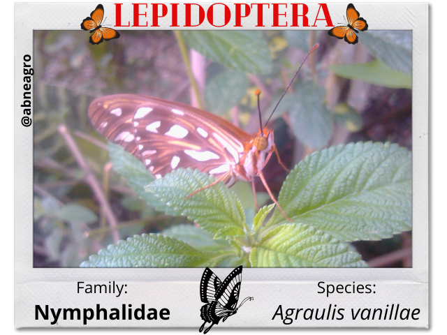 Lepidoptera portada english.png