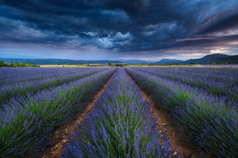 Photographing Lavender Fields of Valensole