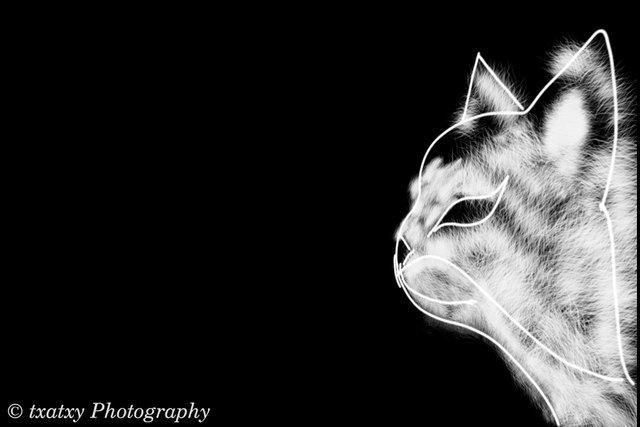 gato02.jpg