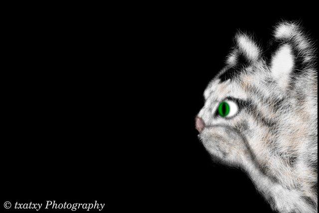 gato03.jpg