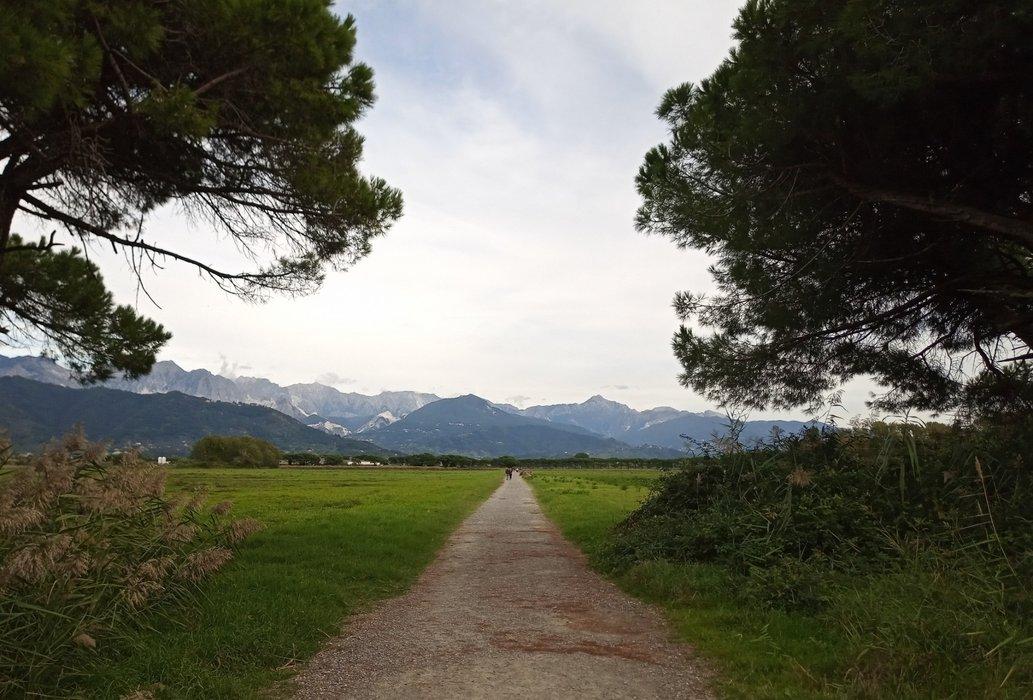Initial Landscape in the Marinella's Estate