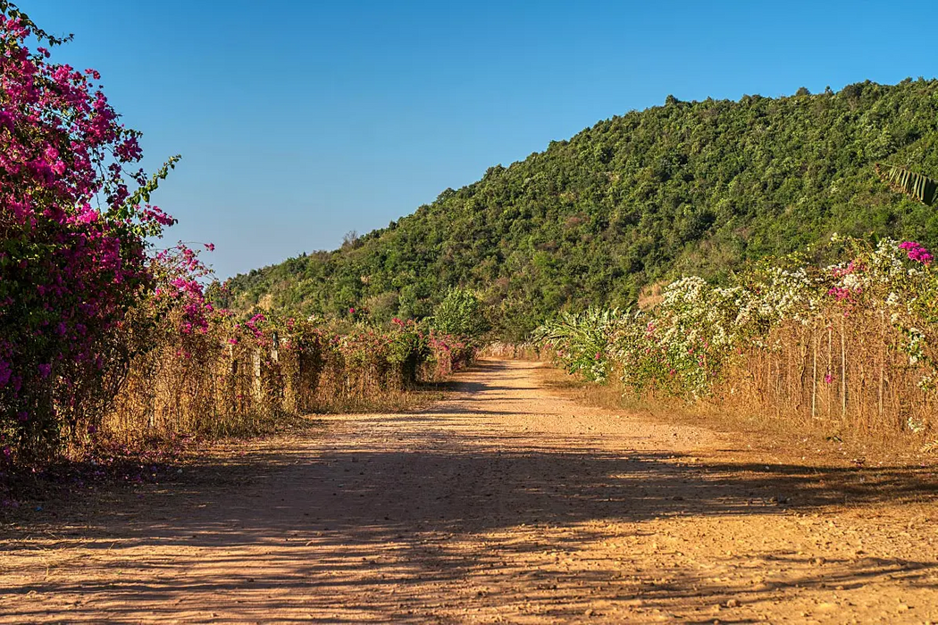 Kep and Kampot regions have the perfect quartz-rich soil and climate for the best pepper in the world.