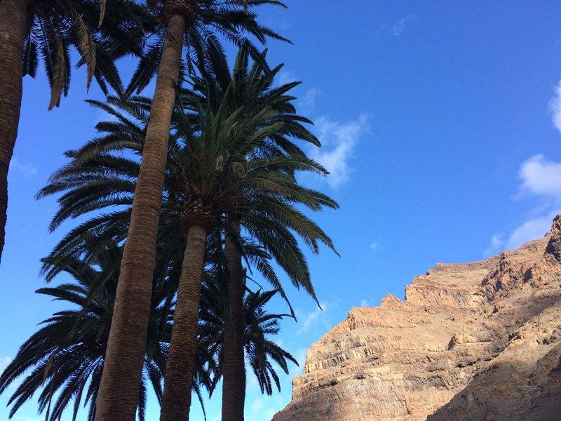La Gomera. Palms and cliffs.