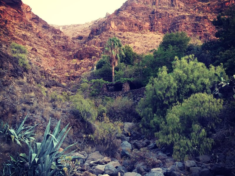 Dry and rocky but green and alive. The canyon leading up from my bay. La Gomera, Valle Gran Rey. Canary islands.