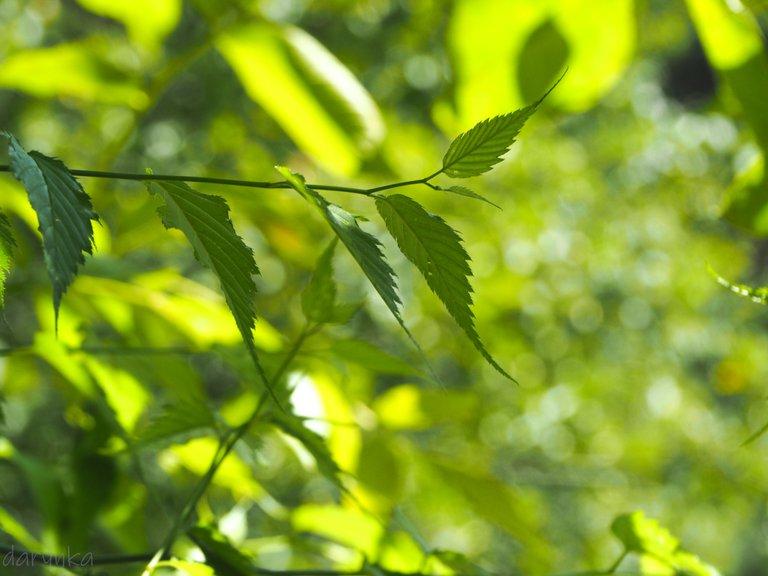 листя великодньої троянди 3.jpg