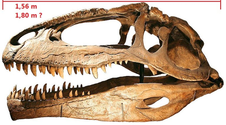 800px-Giganotosaurus.jpg