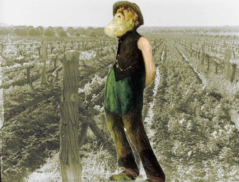 vineyard australia 1935 public2 captain frank hurley man.jpg