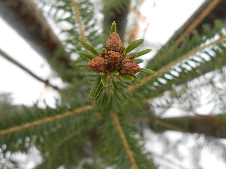 Tree Star 2 (2).JPG