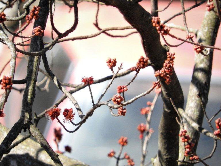 treetuesday5-4-2021-10aok.jpg