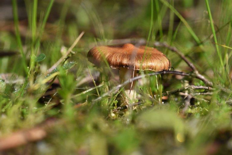 mushrooms march 3.jpg