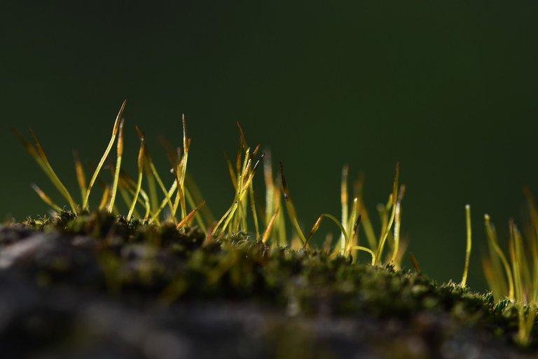 moss olive tree 2.jpg