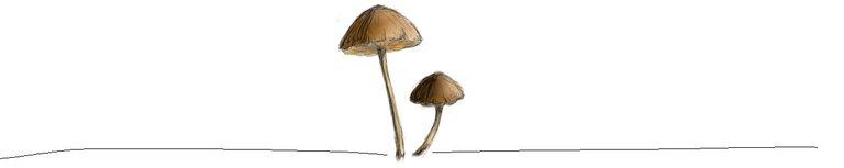 mushrooms footer.jpg