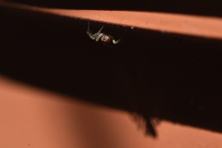 spider balcony pot.jpg