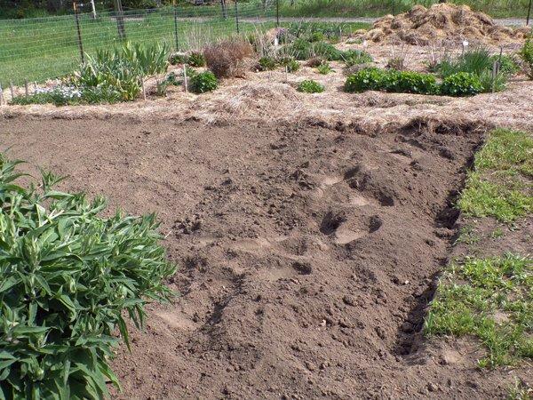 Big garden  east end 4' wider crop May 2020.jpg