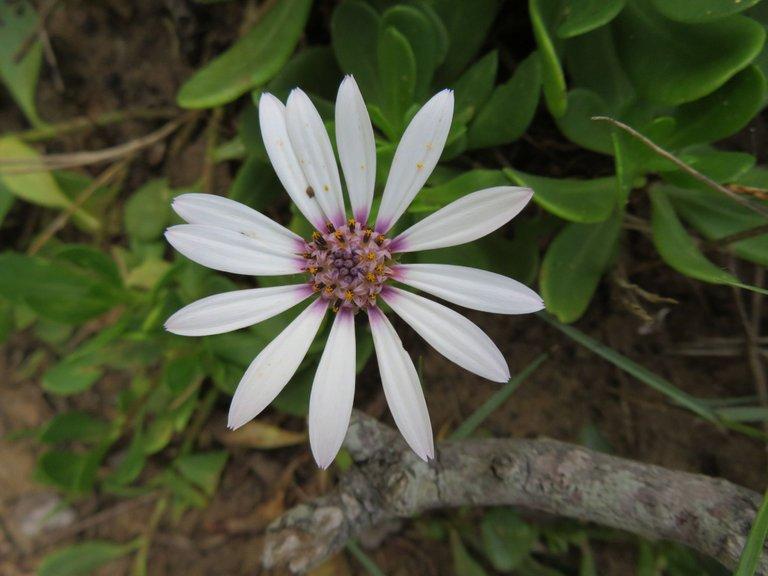 0083-SL18_Flower.JPG