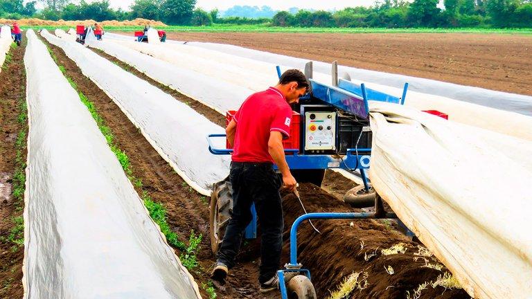 140_Cuando_Viviremos_Paz_Amor_25052020_agricultor.jpg